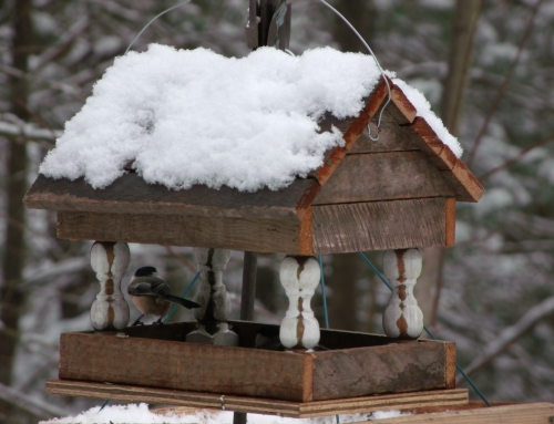 Winter Feeding Our Feathered Friends